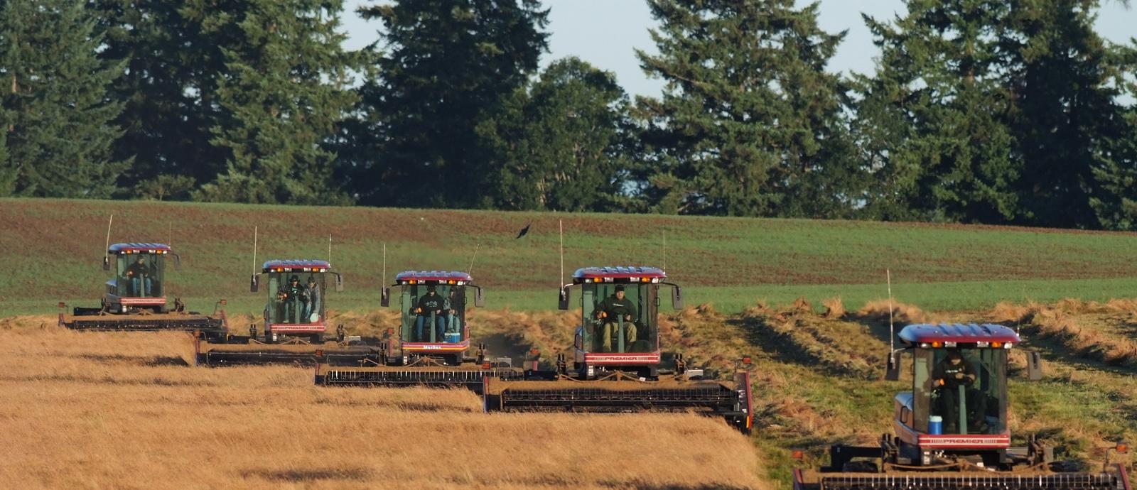 Oregon Seed Council